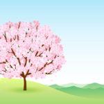 落語 長屋の花見のあらすじ 江戸時代の桜の種類とは