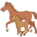 落語 付き馬のあらすじ オチの馬に行けとは?